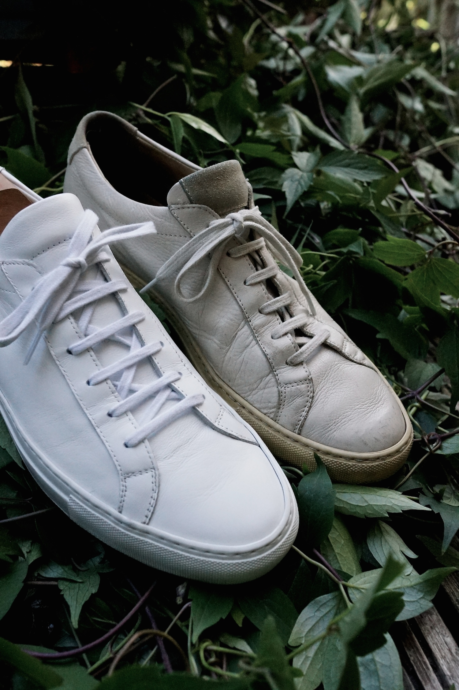 My trainers: Common Projects