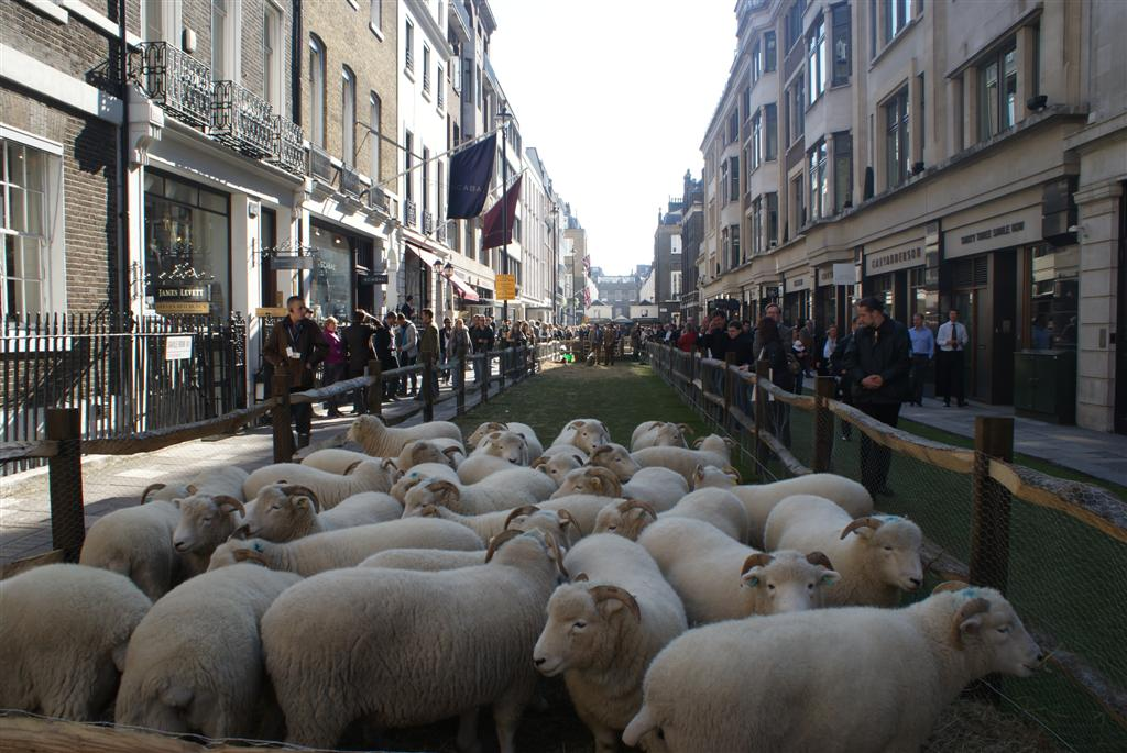 Sheep return to Savile Row!